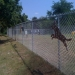 /sites/default/files/images/u901/dogpark2.jpg
